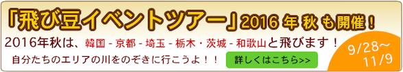 飛び豆2016秋